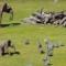 Bebi elefant ka qejf të ndjekë zogjtë/ Video