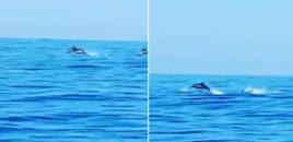 Spektakël me Delfinë në Sarandë. Video
