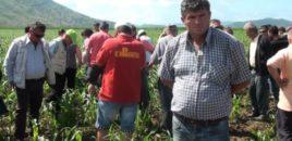 Pas reagimit të Braçes, Fermerët e Divjakës rrisin çmimet e qepës dhe patates